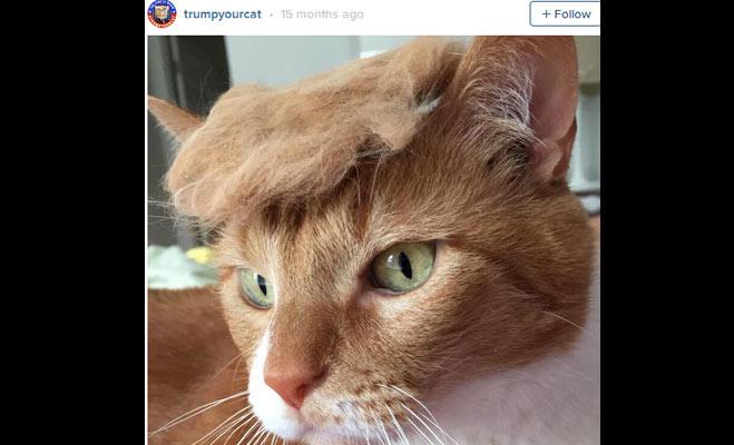 इंटरनेट डोनाल्ड ट्रंप की इन 10 तस्वीरों को लेकर पागल हुआ जा रहा है
