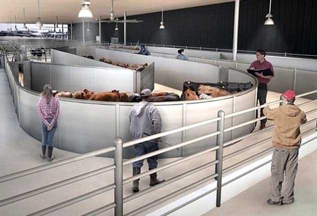 अमेरिका में जानवरों के लिए खुला विश्व का पहला एयरपोर्ट टर्मिनल