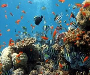 अपने एक्वेरियम में जरूर रखें इस रंग की मछली, पूरा घर रहेगा काली नजर से दूर