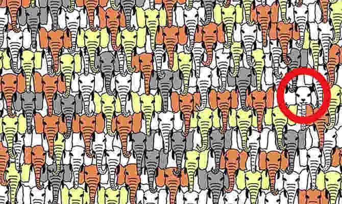 इस क्यूट पांडा को खोजने के लिए चाहिए बाज की नजर,है आपके पास?