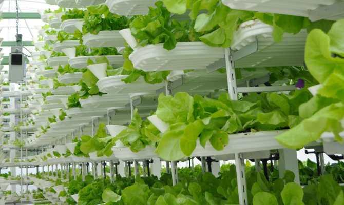 दुबई में मल्टीस्टोरी बिल्डिंग में बन रहा है 900 एकड़ का खेत, जहां हर रोज पैदा होगी हजारों किलो हरी सब्जी
