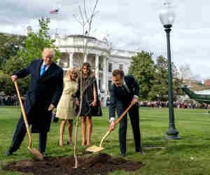 डोनाल्ड ट्रंप और फ्रांस के राष्ट्रपति द्वारा व्हाइट हाउस में लगाया पेड़ अचानक हुआ गायब! वजह जानकर हैरान है दुनिया