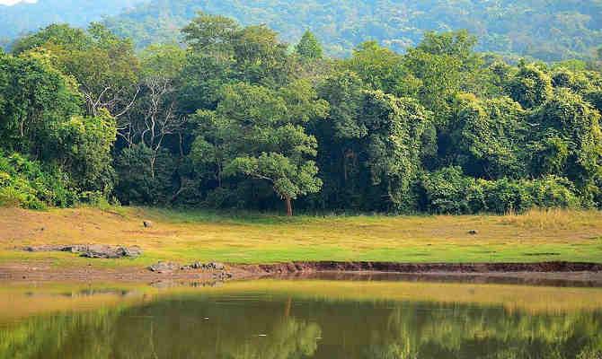 जमशेदपुर: दलमा चाइल्ड लाइफ सेंचुरी में घटे हाथी और अन्य जानवर, आखिर क्यों?