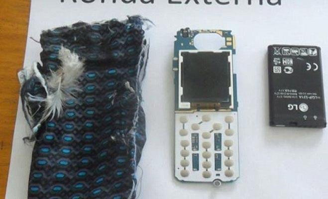 कबूतर कर रहा था जेल में मोबाइल की तस्करी