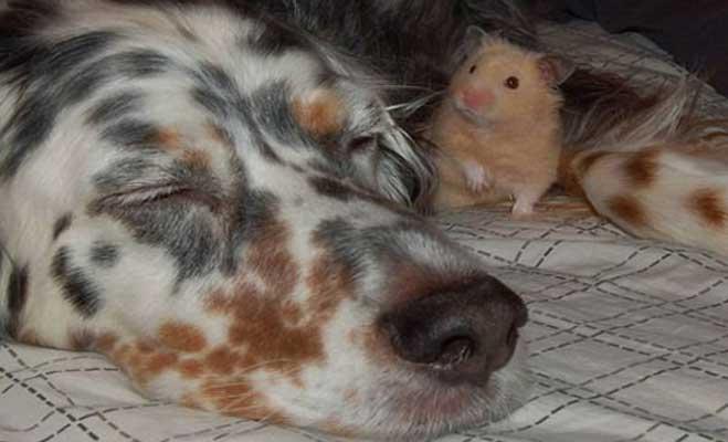 हम साथ-साथ हैं! इन जानवरों की दोस्ती देखकर रह जाएंगे दंग