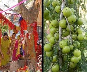 अक्षय नवमी 2018: आंवले के पेड़ का ऐसे करें पूजन, जानें व्रत और दान की तिथि