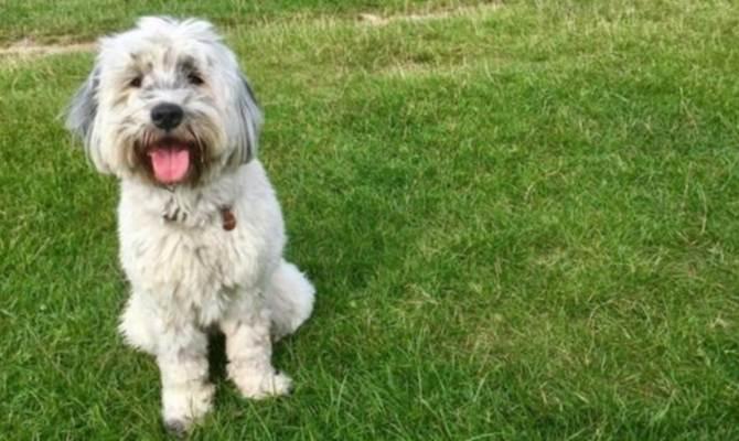 कुत्ते पालने से लंबी हो सकती है जिंदगी
