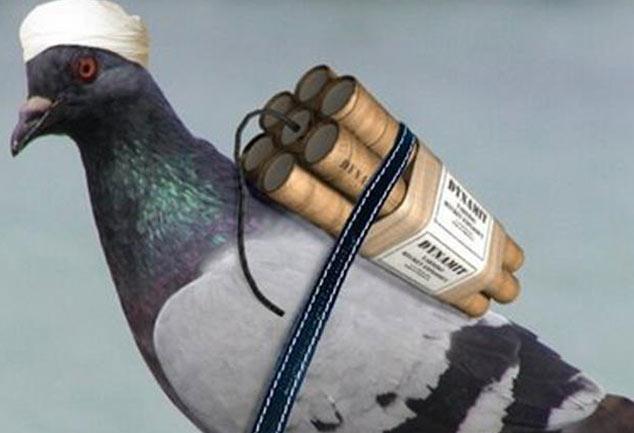...तो क्या अब मानव की जगह बनेंगे पक्षी बम, अफगान में मारा गया पक्षी बम, हुआ विस्फोट