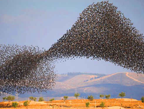 इजरायल के आसमान पर दिखा चिडि़यों का ऐसा डांस, कि दुनिया अब तक देख रही है