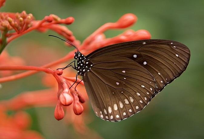तितली की कहानी से समझें जीवन में संघर्ष का महत्व, वर्ना हो जाएंगे 'अपंग'