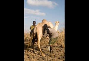कभी पीया है ऊंट का दूध! जानें दुनिया में कहां किस जानवर का दूध पीते हैं लोग