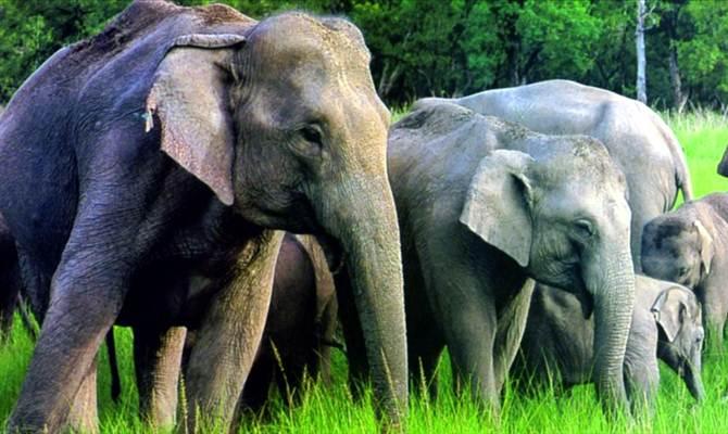 दलमा वाइल्ड लाइफ पार्क के आसपास के गांवों में हाथियों ने मचाया खतरनाक उत्पात