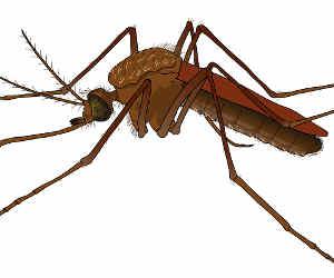 जमशेदपुर: दो दर्जन थानों में डेंगू का खौफ, अलर्ट जारी