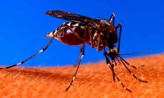 रहना संभल के, इस बार डेंगू से अधिक खतरा