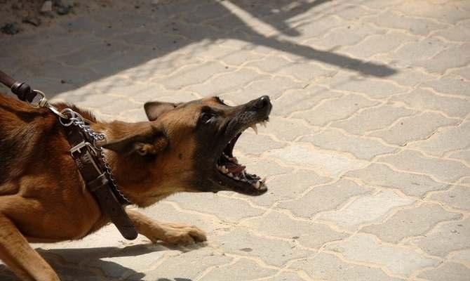 घर के बाहर खेल रहे मासूम को कुत्तों ने नोंचकर मार डाला