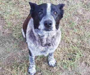 घर से बिछड़ी 3 साल की मासूम की जान बचाने को यह कुत्ता रात भर बारिश के बीच देता रहा पहरा!