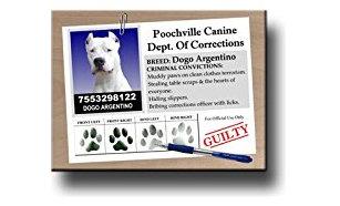 कुत्ते को अब डॉग नहीं कहेंगे डोगोज,डिक्शनरी में शामिल होगा यह शब्द