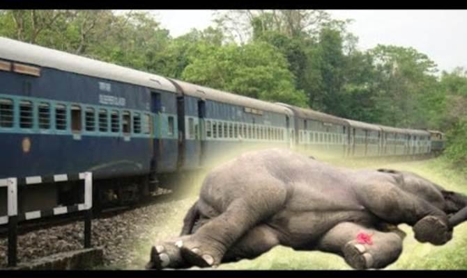 पानी की तलाश में निकले गजराज को रेलवे ट्रैक पर मिली मौत