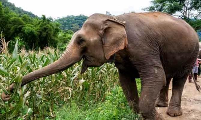 देहरादून: वीडियो बना रहे युवक को हाथी ने पटक पटककर मार डाला