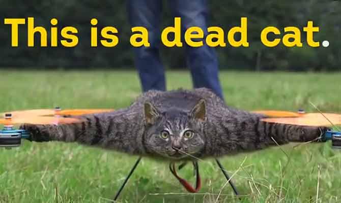 उड़ती हुई बिल्ली और चूहा देखा है कभी,ये जनाब करा रहे हैं ऐसा ही कारनामा
