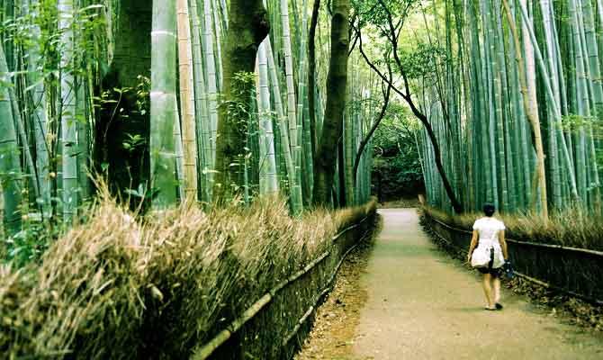 जंगल बाथ कीजिए और फिट रहिए हमेशा! जापान वाले तो यही करके मजे की जिंदगी जी रहे हैं
