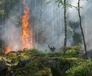 उत्तराखंड में जंगल की आग हुई बेकाबू, दो जिलों को छोड़कर हर जगह आग!