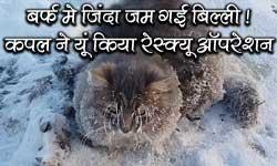बर्फ में जम गई जिंदा बिल्ली! कपल ने बचाई जान तो इमोशनल हुई ये क्यूट कैट
