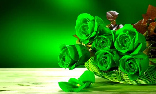 Image result for हरा रंग का गुलाब