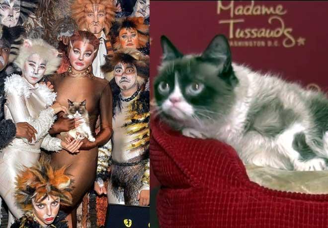 मैडम तुसाद म्यूजियम में लगा इस गुस्सैल बिल्ली का पुतला,वैक्स अवतार में राष्ट्रपति संग खिंचवाई तस्वीर!