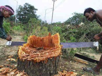 आरे मुंबई की तरह कानपुर में भी सैकड़ों पेड़ों पर चलेगी आरी