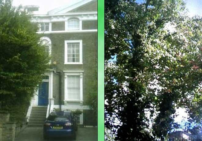 दुश्मनों की खाट खड़ी करने वाला जेम्स बॉन्ड आज एक पेड़ के लिए लड़ रहा पड़ोसियों से!
