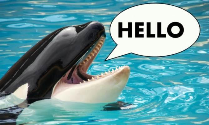 विज्ञान या इंसान किसके चमत्कार से ये Whale मछली बोल रही है अंग्रेजी भाषा?