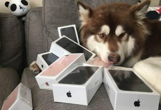 इस अरबपती के बेटे ने कुत्ते के लिए खरीद डाले आठ आईफोन 7