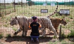 शेर चीतों को बनाया परिवार अब खिलाने के लिए बेचना पड़ा मकान