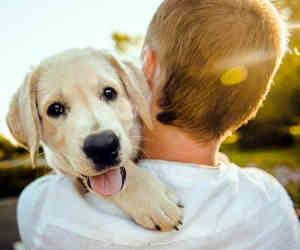 प्यार हो तो ऐसा! यह कुत्ता रेलवे स्टेशन पर हर रोज 12 घंटे करता है अपने मालिक के लौटने का इंतजार