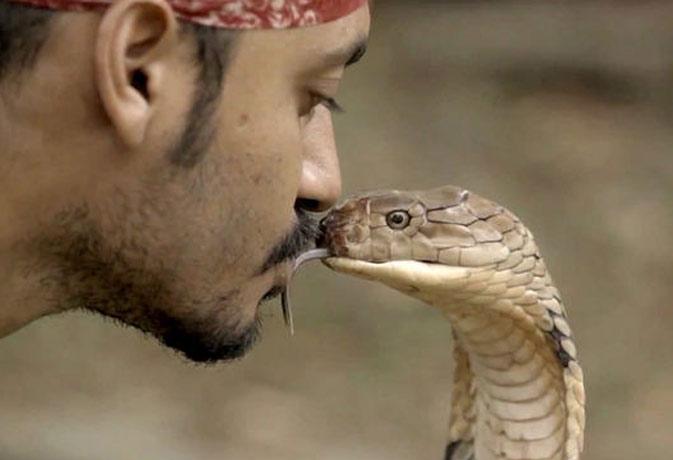 वीडियो : और देखते ही देखते सांप को किस कर लिया इस इंसान ने