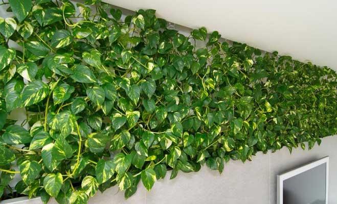अगर घर पर होंगे ये पौधे तो रहेंगे बीमारियों से दूर