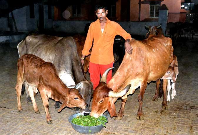 मान मोहम्मद के जिम्मे है योगी आदित्यनाथ के गायों की जिम्मेदारी