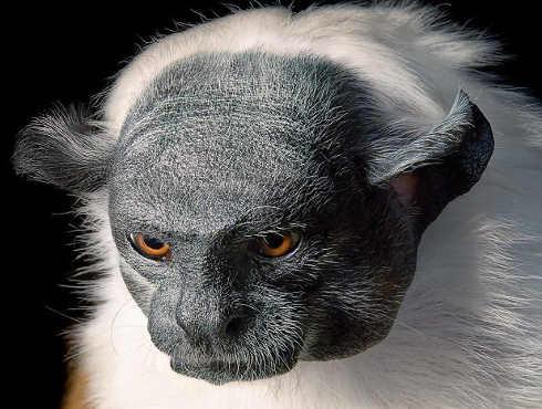 इंसानों की वजह से ये 10 खूबसूरत जानवर विलुप्त हुए जा रहे हैं और हमें कोई परवाह ही नहीं