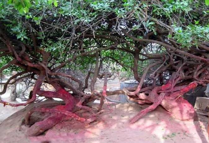 इस वन में हर रात गोपियों संग महारास रचाते हैं श्रीकृष्ण,देखने वाला हो जाता है पागल