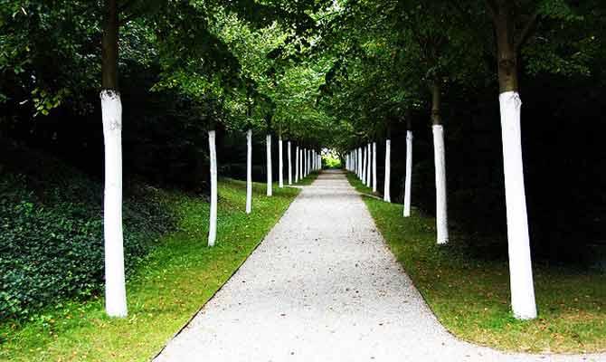 पेड़ों को पेंट कर देते हैं कभी लाल तो कभी सफेद,वजह जानना है जरूरी