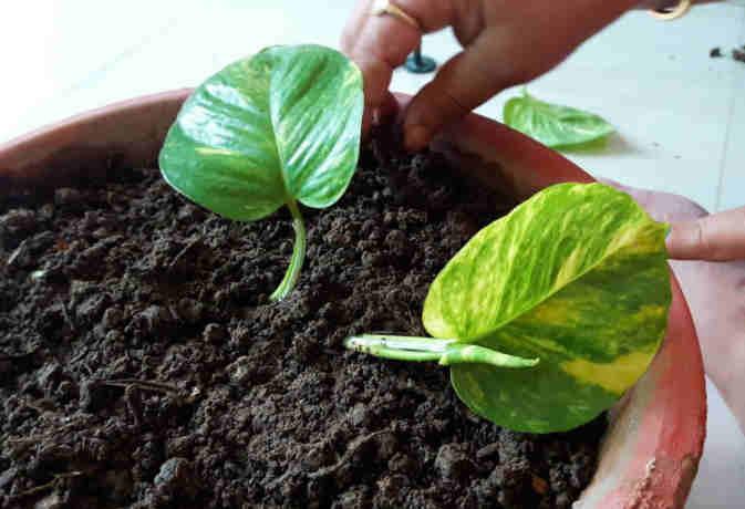 एप पर आर्डर कर, घर मंगवाएं पौधे