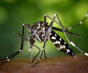 भूल जाइए मॉस्क्यूटो क्वाइल, क्योंकि चीन ने बनाया है ऐसा हथियार जो 2 किलोमीटर दूर से निपटा देगा मच्छरों की सेना को!