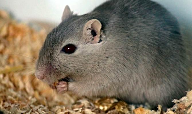 गजब! जब पुलिस ने कोर्ट में कहा कि करोड़ों रुपए की मरिजुआना ड्रग्स खा गए चूहे, हमारी क्या गलती?