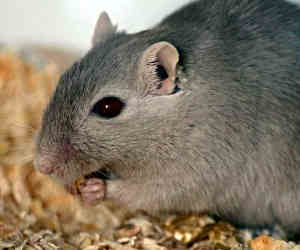 बिहार के इस थाने में चूहे खा गए थाने में रखे 53 हजार रुपए