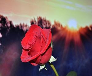 ग्रह प्रभाव: फूल से बदल सकती है किस्मत, जानें किस दिन कौन सा पुष्प रखें पास