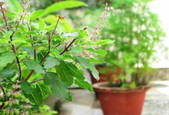 वास्तु टिप्स: ये पौधे घर में लगाने से लव लाइफ होगी और शानदार,टेंशन जाएंगे भूल