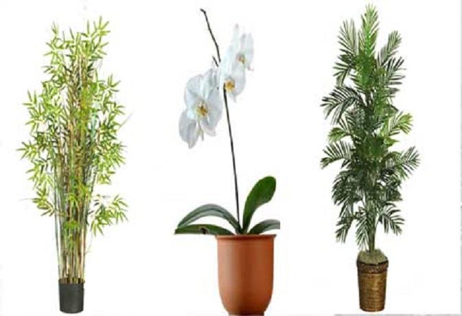 वास्तु टिप्स: तनाव से बचने के लिए ऑफिस में लगाएं ये पौधे, मिलेगा सुखद एहसास