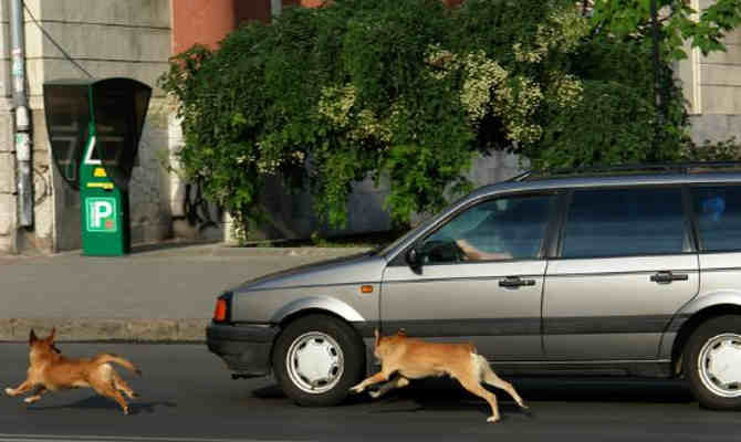कुत्ते आखिर क्यों भागते हैं कारों के पीछे? जवाब जानकर उन पर गुस्सा नहीं आएगा