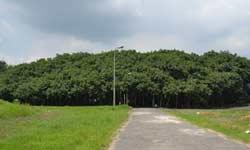 एक पेड़ जो किसी जंगल से कम नहीं